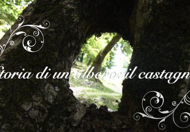 Storia di un albero: il castagno